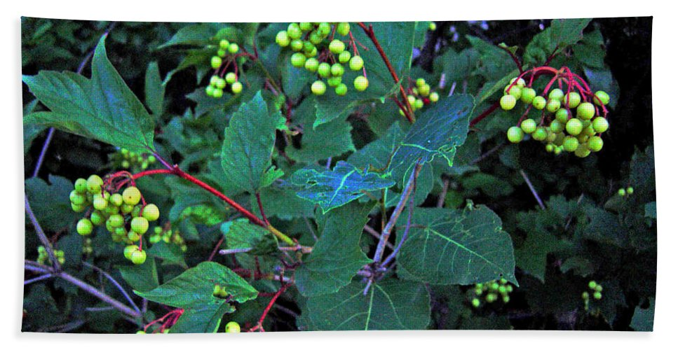 Hi Bush Cranberries And Leaves Beach Towel featuring the photograph Summer Berries by Joanne Smoley