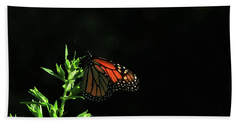 Butterfly Beach Towel featuring the photograph Summer Capture by Karol Livote
