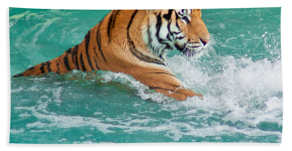 Tiger Beach Towel featuring the photograph Summer Fun by Colleen Coccia