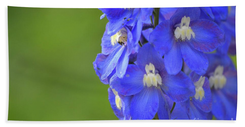 Blue Beach Towel featuring the photograph Summertime by Traci Cottingham