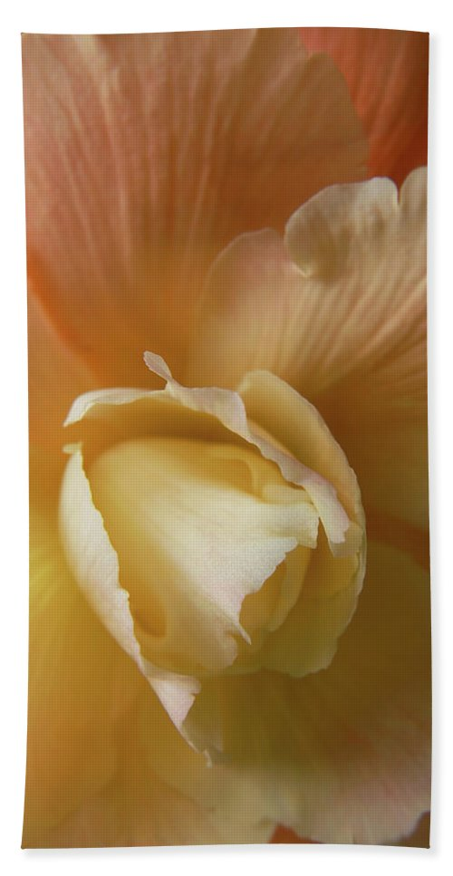 Begonia Beach Towel featuring the photograph Sun Kissed Begonia Flower by Jennie Marie Schell