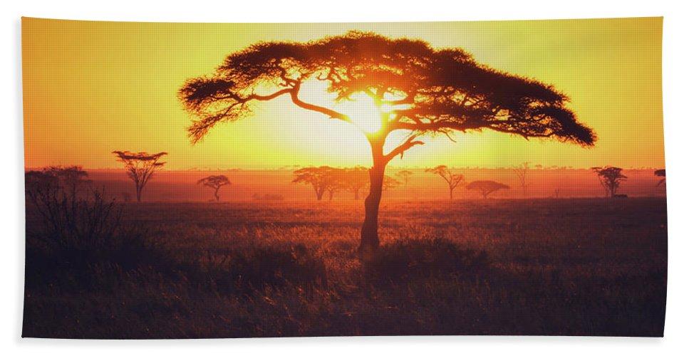 Sunrise Beach Towel featuring the photograph Sun Through Acacia by Vicki Jauron