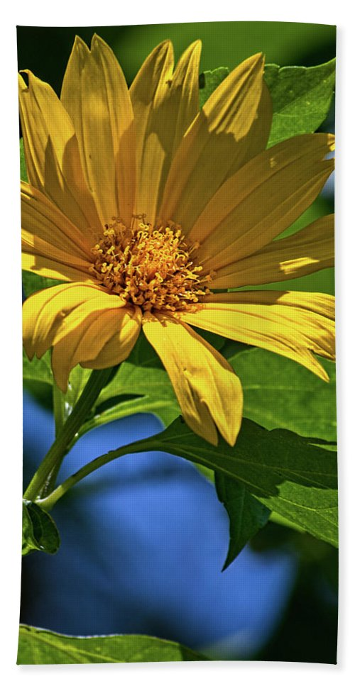 Flower Beach Towel featuring the photograph Sun Yellow by Christopher Holmes