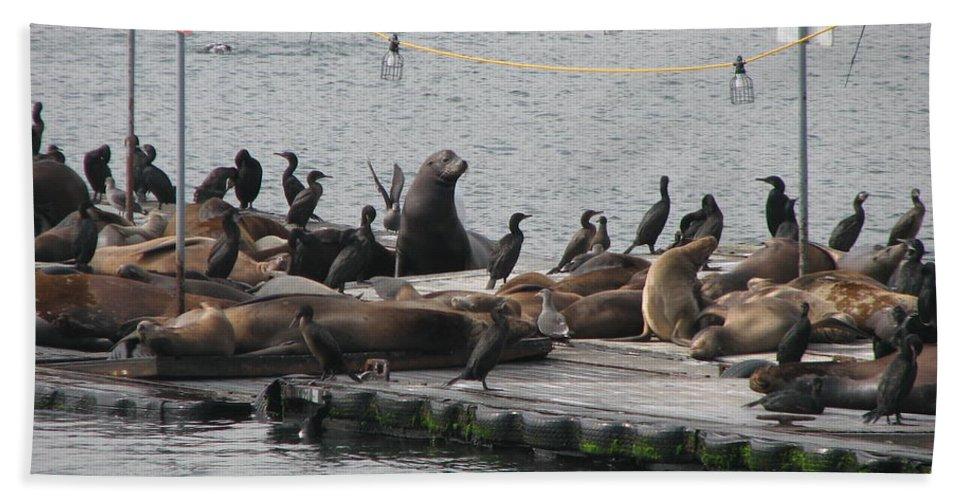 Sea Lions Beach Towel featuring the photograph Sunbathing by Sandra Bourret