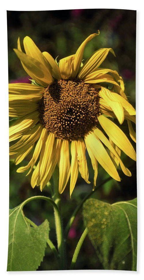 Sunflower Beach Towel featuring the photograph Sunflower Close Up by Sally Weigand