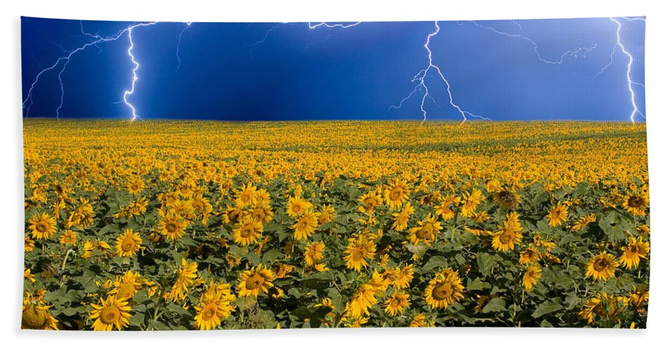 Sunflowers Beach Towel featuring the photograph Sunflower Lightning Field by James BO Insogna