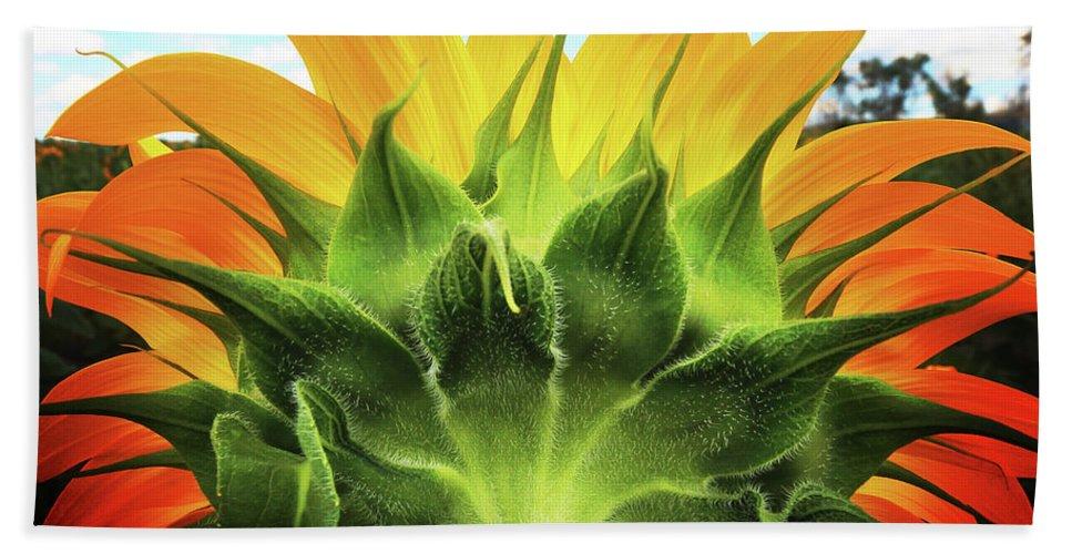 Sunflower Beach Towel featuring the photograph Sunflower Sunburst by Brian Gustafson