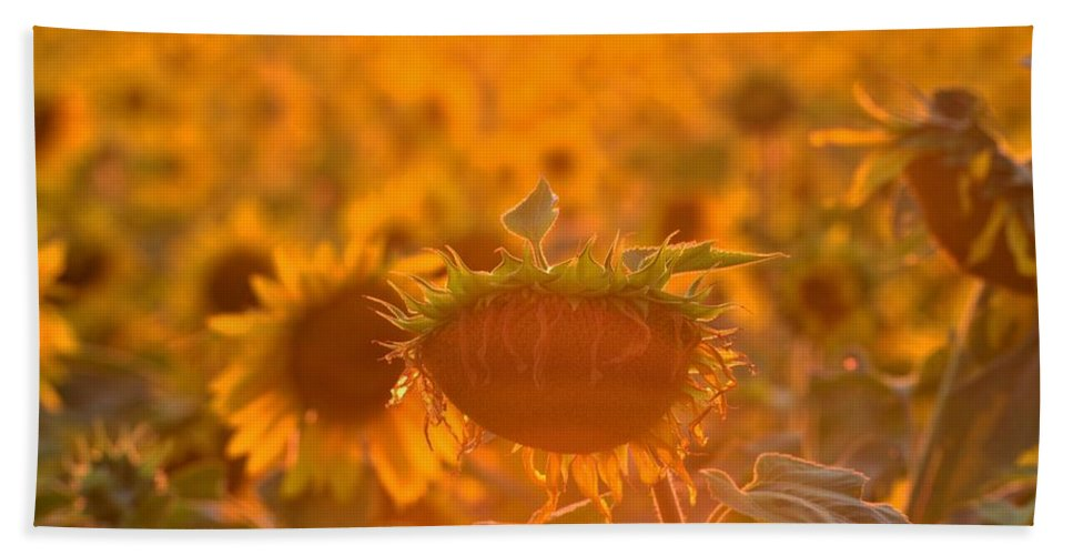 Beach Towel featuring the photograph Sunflower Sunset by Saige Ouellet