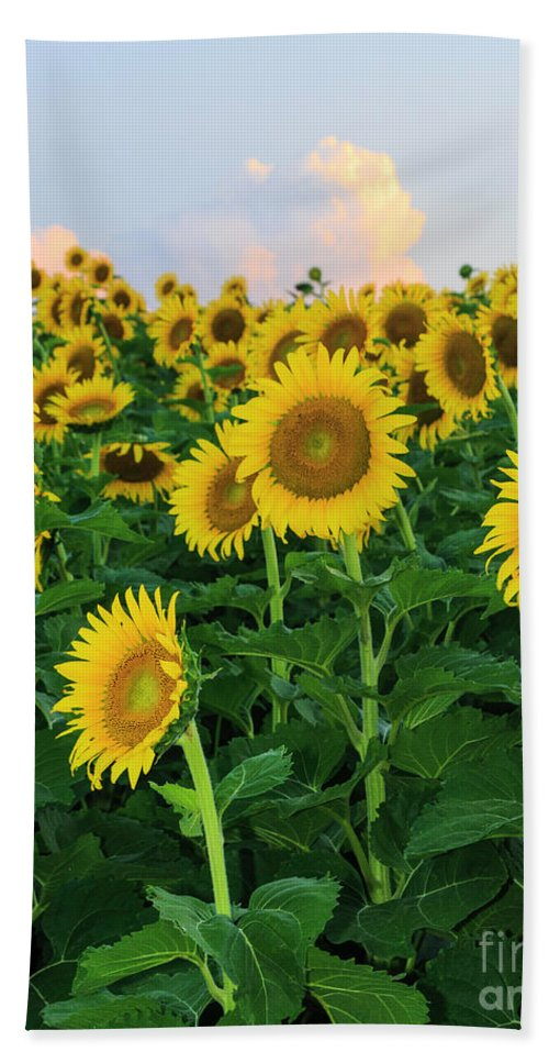 Flower Beach Towel featuring the photograph Sunflowers In The Sky by Terri Morris