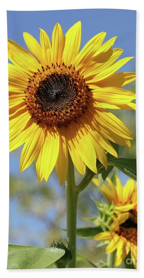 Sunflower Beach Towel featuring the photograph Sunflowers by Sabrina L Ryan