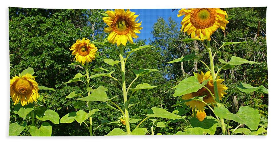 Sunflower Beach Towel featuring the photograph Sunflowers by Zal Latzkovich