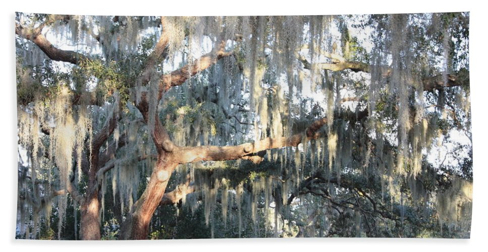 Spanish Moss Beach Towel featuring the photograph Sunlight On Mossy Tree by Carol Groenen