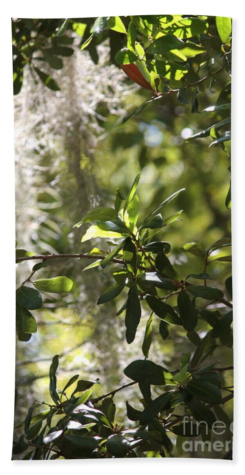 Tree Beach Towel featuring the photograph Sunlight Through The Oak by Carol Groenen