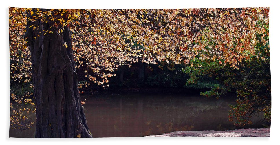 Leaves Beach Towel featuring the photograph Sunlit Autumn Canopy by Bel Menpes