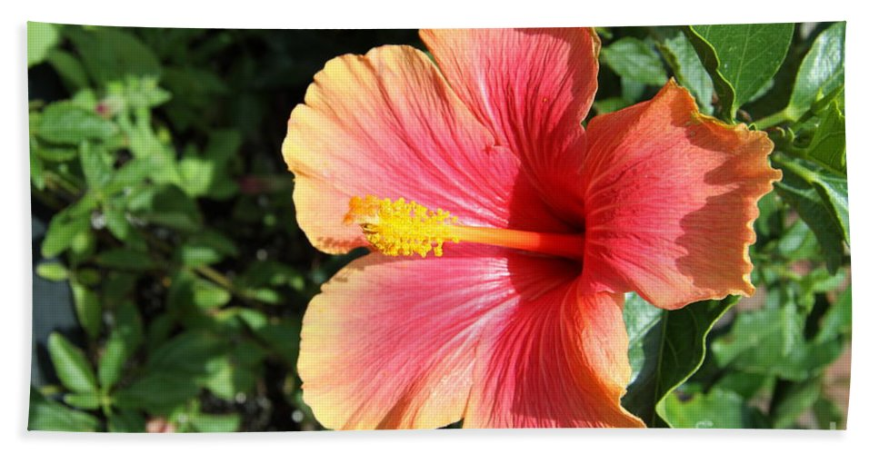 Hibiscus Beach Towel featuring the photograph Sunlit Beauty by Christiane Schulze Art And Photography