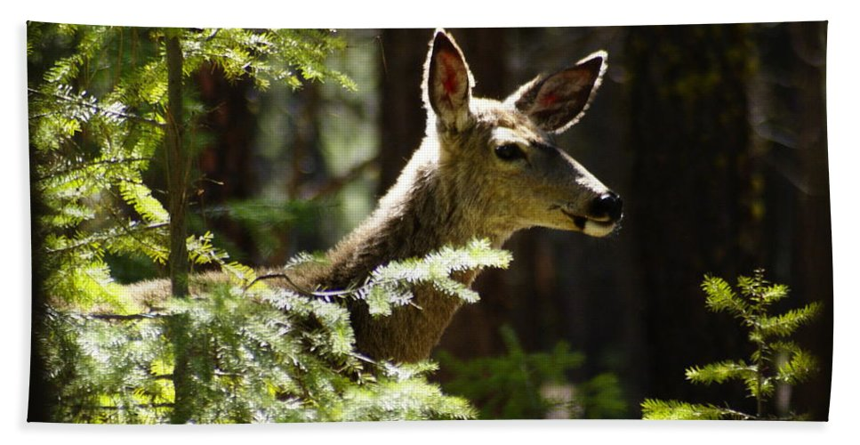 Spokane Beach Towel featuring the photograph Sunlit Deer Friend by Ben Upham III