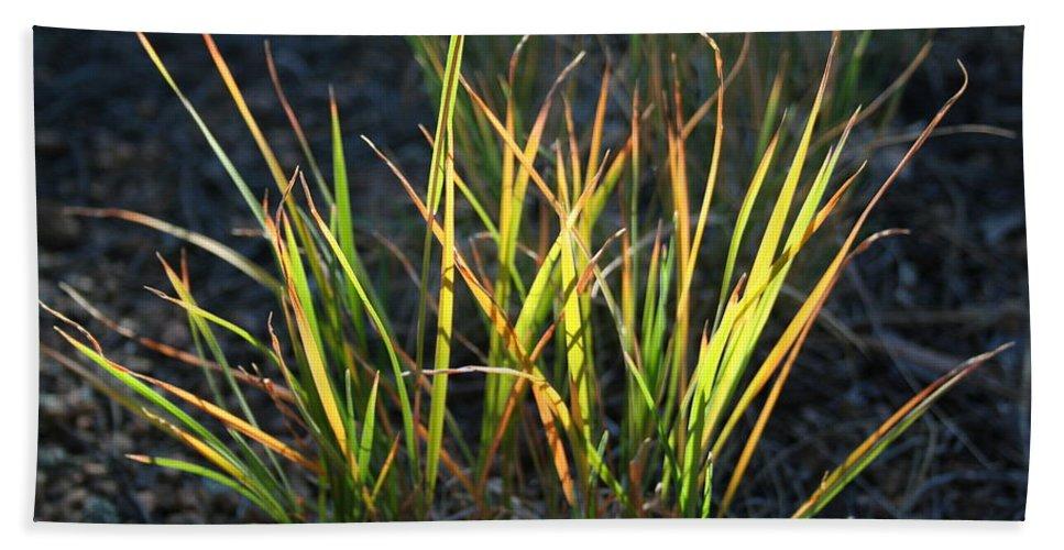 Grass Beach Towel featuring the photograph Sunlit Grass by Ric Bascobert