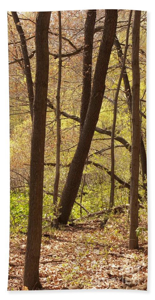 Spring Beach Towel featuring the photograph Sunlit Woods by Ann Horn