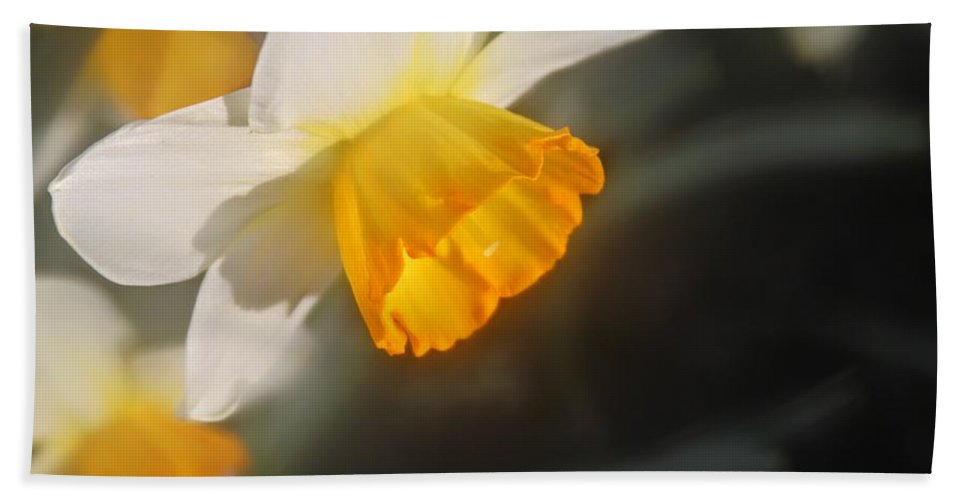 Daffodil Beach Towel featuring the photograph Sunny Daffodil by Ruth Owen Fine Art and Photography