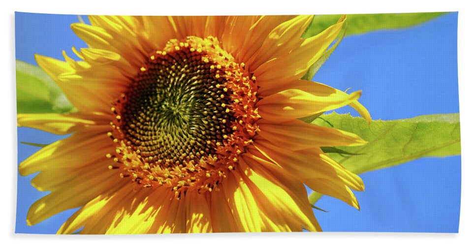 Sunflower Beach Towel featuring the photograph Sunny Sunflower by Christina Rollo