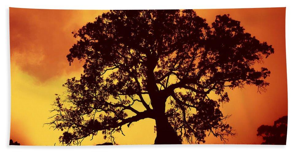 Gum Tree Beach Towel featuring the photograph Sunrise Gum by Mike Dawson