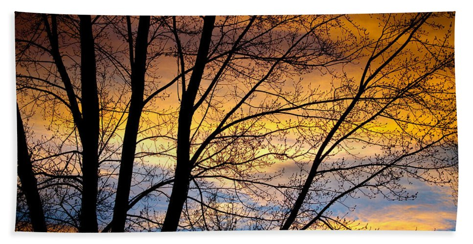 Canvas Print Beach Towel featuring the photograph Sunset Tree Silhouette by James BO Insogna