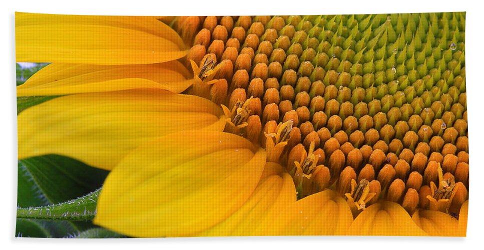 Flower Beach Towel featuring the photograph Sunshine In A Flower by Shari Jardina