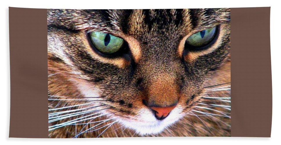 Cats Beach Towel featuring the photograph Surmising by Angela Davies