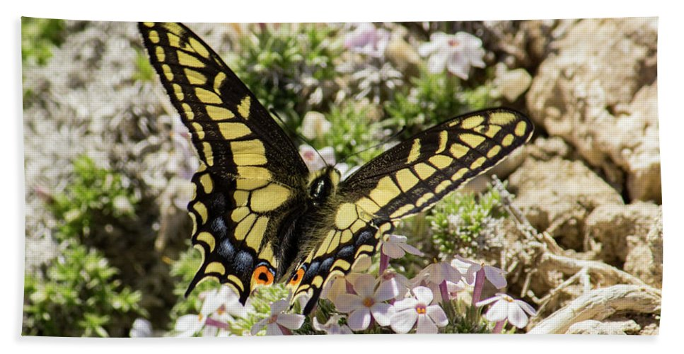 Colorado Beach Towel featuring the photograph Swallowtail At Sand Wash by Debbie Rudd