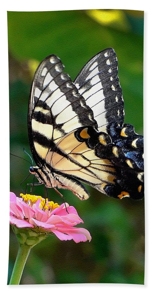 Swallowtail Beach Towel featuring the photograph Swallowtail Butterfly 3 by Sue Melvin