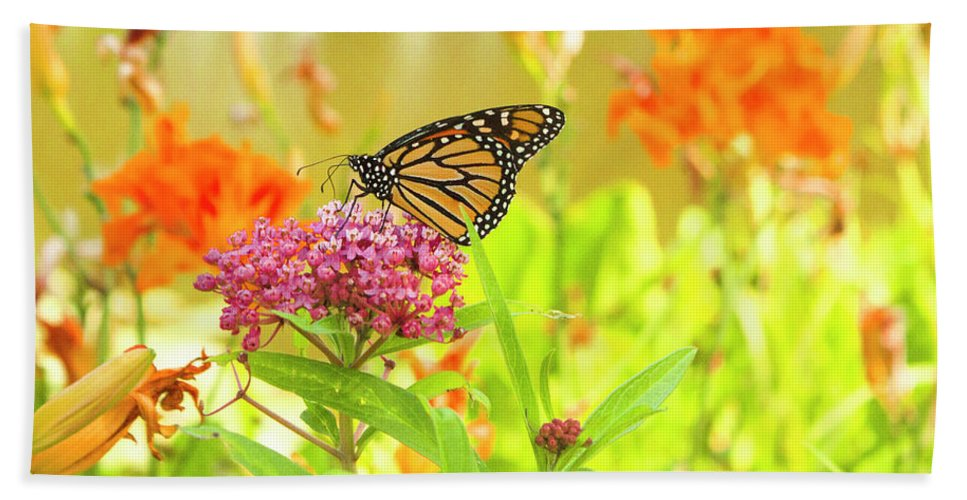Butterfly Beach Towel featuring the photograph Swamp Milkweed And Monarch by Dawn Braun