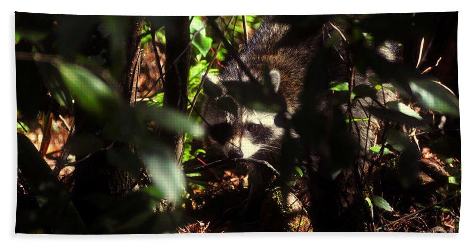 Raccoon Beach Towel featuring the photograph Swamp Raccoon by David Lee Thompson