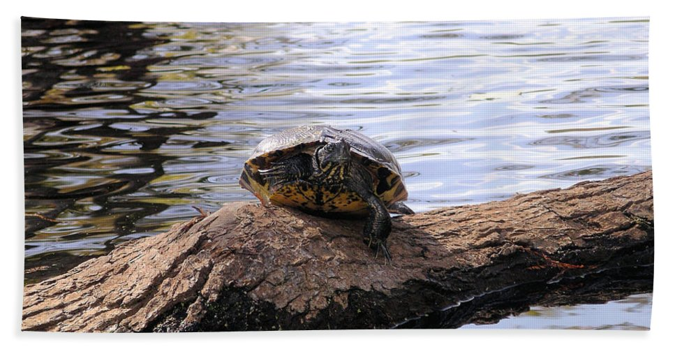 Turtle Beach Towel featuring the photograph Swamp Turtle by Rich Bodane