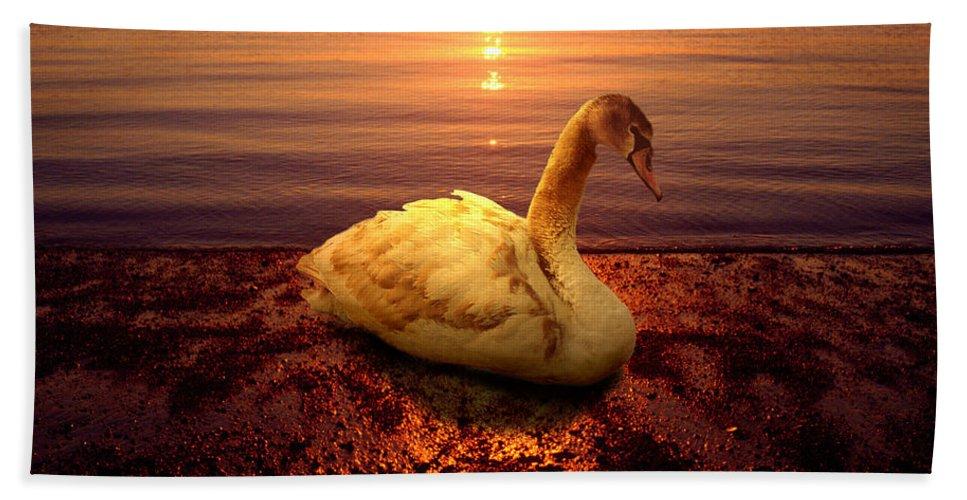 Animal Beach Towel featuring the photograph Swan Lake by Yuri Lev