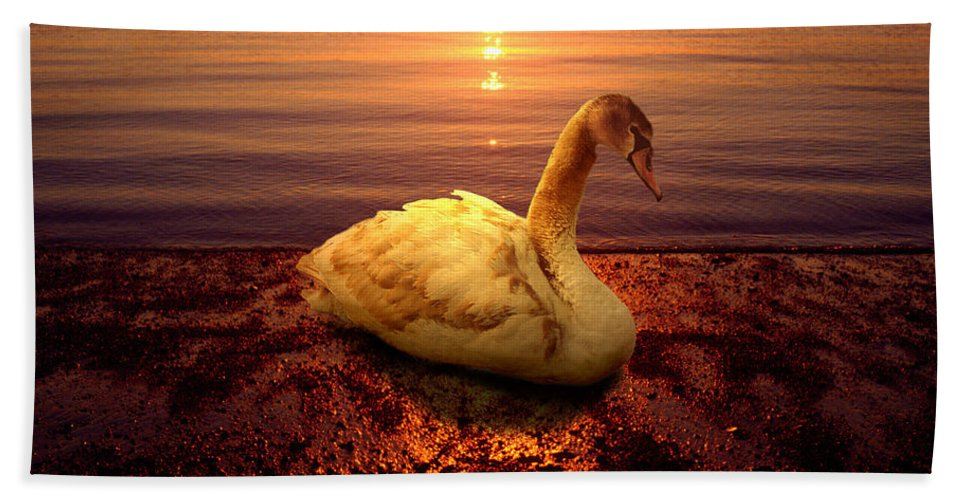 Animal Beach Sheet featuring the photograph Swan Lake by Yuri Lev