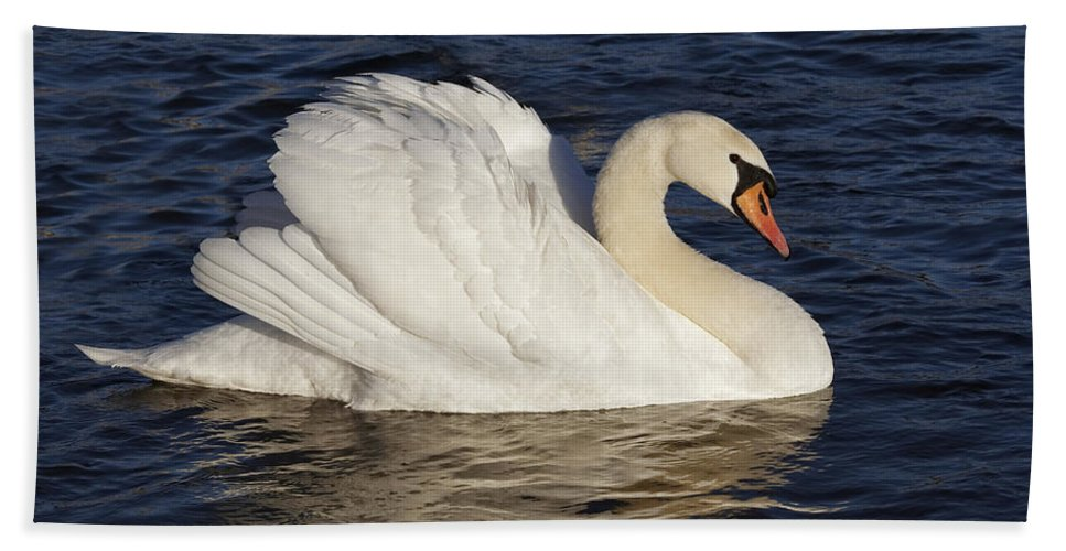 Swan Beach Towel featuring the photograph Swan by Michal Boubin