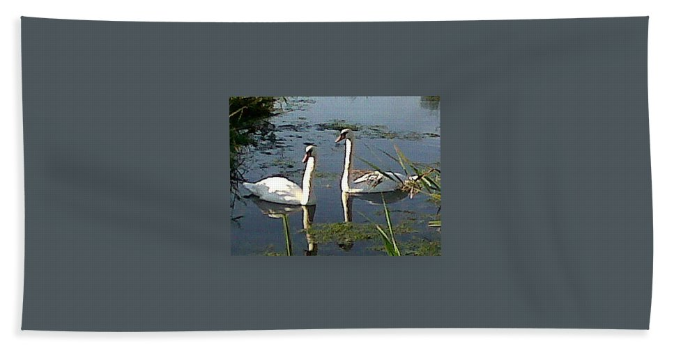 Swans Beach Towel featuring the photograph Swans In The Sunshine by Susan Baker
