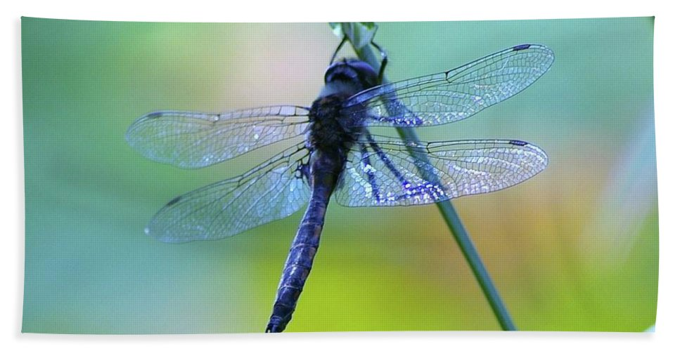 Dragonflies Beach Towel featuring the photograph Swaying On A Stem by Jeff Swan
