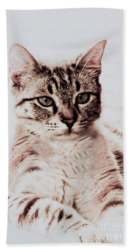 Cats Beach Towel featuring the photograph Sweet Jaspurr by Kim Henderson