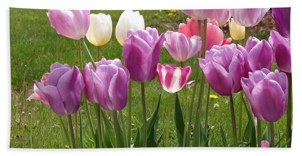 Tulips Beach Towel featuring the photograph Sweet Lips by Priscilla Richardson
