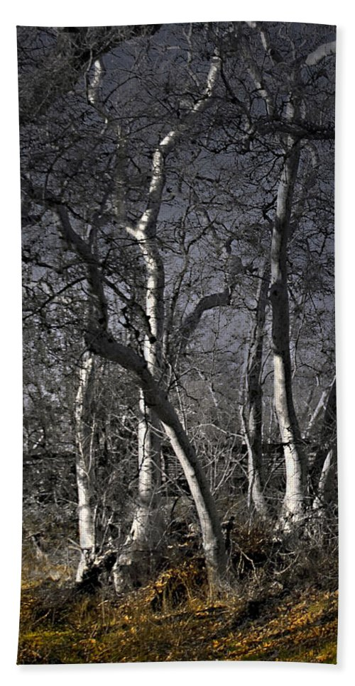 Landscape Beach Towel featuring the photograph Sycamore Grove by Karen W Meyer