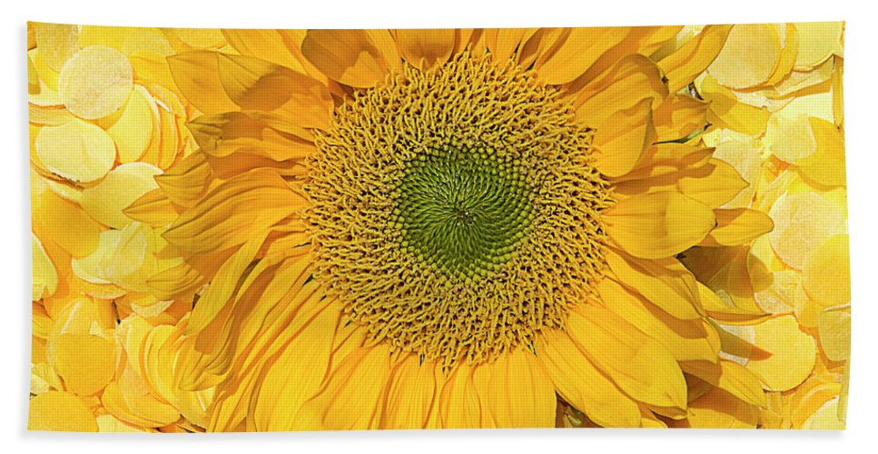 Sunflower Print Beach Towel featuring the photograph Symphony In Yellow by Elisabeth Lucas