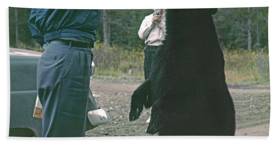 Bear Feeding Beach Towel featuring the photograph T-203503 Bear Feeding In The Old Days by Ed Cooper Photography