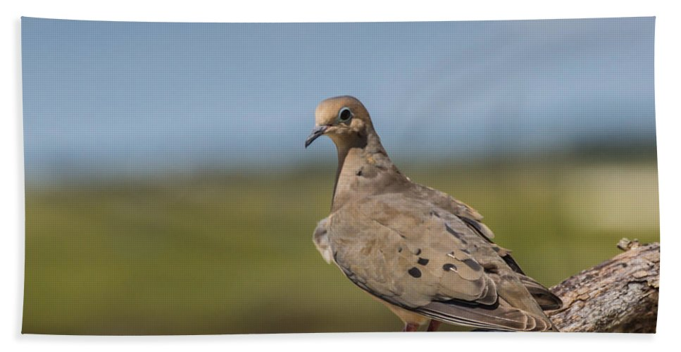 Bird Beach Towel featuring the photograph Taking A Breather by MaryAnn Barry