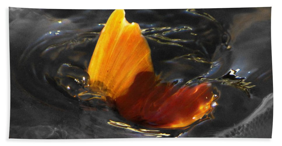 Black Beach Towel featuring the photograph Tale Of The Wild Koi 3 by September Stone