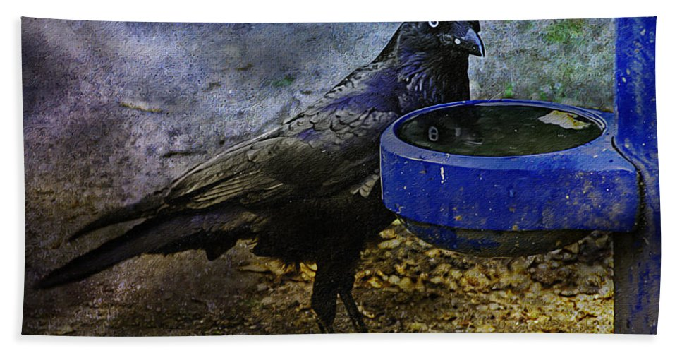Crow Beach Towel featuring the photograph Taming Of The Crow by Georgiana Romanovna