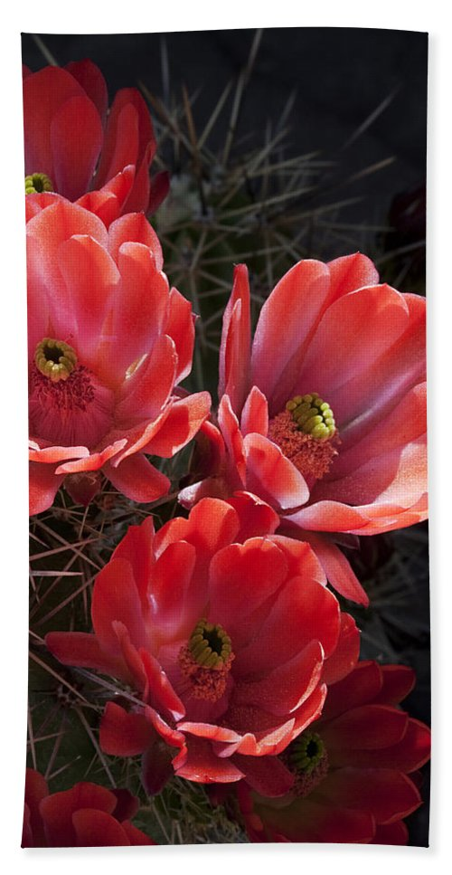 Blossoms Beach Towel featuring the photograph Tangerine Cactus Flower by Phyllis Denton