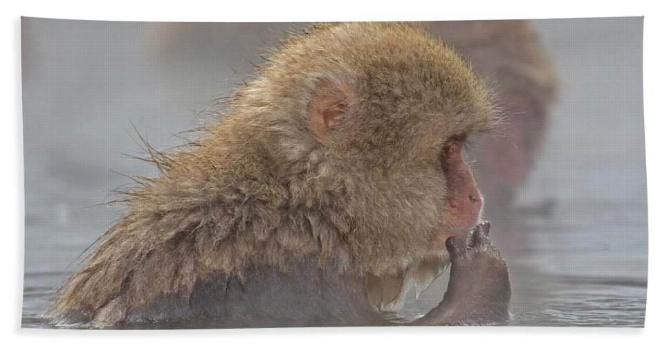 Snow Monkeys Beach Towel featuring the photograph Tasty by Leigh Lofgren