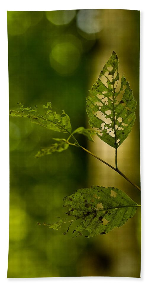 Leaf Beach Towel featuring the photograph Tattered Leaves by Mike Reid