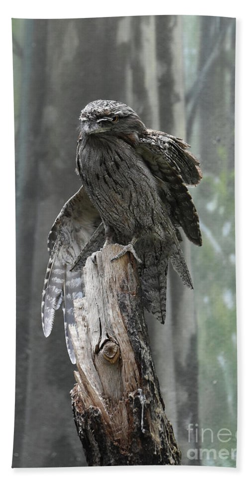 Tawny-frogmouth Beach Towel featuring the photograph Tawny Frogmouth With It's Eyes Closed And Wing Extended by DejaVu Designs